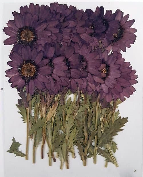 usartquest_driedflowers_purple
